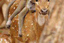Relaciones entre especies