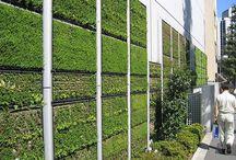 Ogrody wertykalne / Zielone ściany