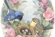 Ptaki i kwiaty
