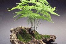 penjing / by Susan Laughlin