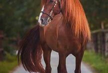 koně :D