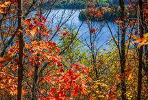 design inspiration: autumn / images of autumn, images of fall, pictures of autumn landscapes, pictures of fall landscapes, enjoy autumn, enjoy fall, design, inspiration, pattern, color, colorful, color palettes, mood boards