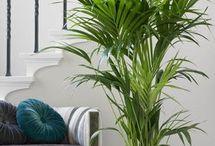 Pflanzen für Wohnung