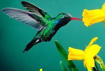 idées logo - colibri / Idées pour un logo avec un colibri