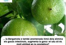 Bergamota / Bergamota  / Aquí trobaràs curiositats sobre la bergamota / Aquí encontrarás curiosidades sobre la bergamota