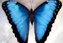 Beautiful Butterfly Species / Our tribute to the fascinating an wonderful butterfly species of the world