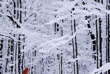Winter en sneeuwkristallen