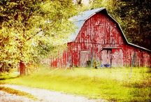 """the Barn /  """"Inside a barn is a whole universe, with its own time zone and climate and ecosystem, a shadowy world of swirling dust illuminated in tiger stripes by light shining through the cracks in the boards."""" --Carolyn Jourden"""