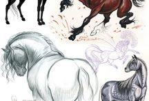 Elife hayvanlar