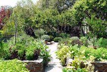 Vege Gardening