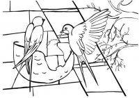 gólya fecske projekt