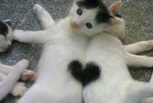boldog mintás cicák