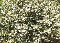 Full Shade Perennials - Zone 3 / by Jennifer Baker