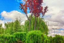 Doğa / Ağaç mağaç.