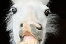 We Love / All things equine related