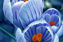 Flowers  / by Lyndi  K Kierans