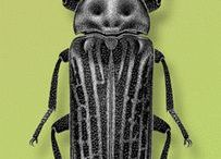 Cool insects
