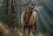 jelen na ruji