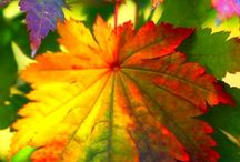 Feuilles / by christiane greco