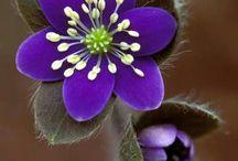 Flowers (rare, beautiful)
