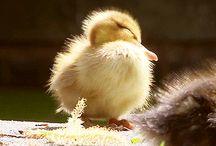 Cute & fluffy animals