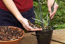 Zimmerpflanzen/Orchideen