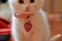 Cute! / Um cute amazing animals!