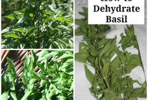 Herbs for Eating or Medicine