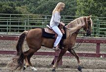 Le Kentucky Moutain Saddle Horse / Le Kentucky Moutain Saddle Horse a des origines qui ne sont pas connues, la seule information qui est certaine est qu'il a pour ancêtre le Tennesse Walker. Élevé aux États Unis, au Canada et pour certains en Europe, le Kentucky Moutain Saddle Horse est une race qui se porte bien.