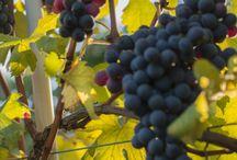 Wine / Wines around the world.