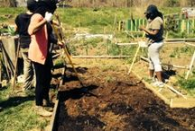 Nothing says spring better than getting your plantin' on! / Volunteer Day with Slow Food DC at Wangari Gardens in Washington, DC!