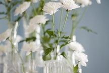 White / by Caroline Ritter
