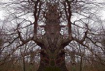 Trees Otherwordly