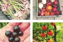 FOOD INSPIRATION / Meal + Recipe Inspiration