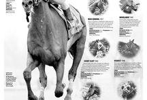 Triple Croen Race Horses