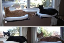 diy for cats & co. / by a random bird