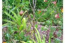 Food Forests and Edible Gardens
