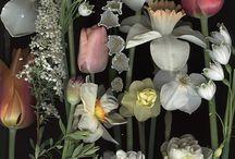 arrangement of flowers / arrangement of flowers