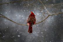 SNOW! SNOW! SNOW! / by Nichole Weeks