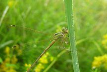 Goange / ..adica alte insecte ( :