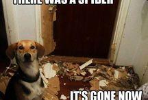 Bahahahahaha! / Funnies