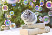 Guinea Pig Photoshoot Inspiration