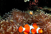 Can't Ping 'em, Sea / Here we post pictures of the fantastic animals you will find in the sea. We are all part of the world.