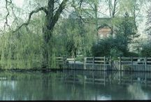 ♥  Weeping Willows ♥ / for the love of Weeping Willow trees