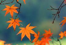 Bijoux d'automne / Quand les bijoux s'accordent aux couleurs du temps.
