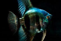 AQ-Fische