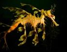 marine biology / by Anthony Hicks