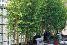 Best Roof Garden Plants You should plant - Rooftop Garden Ideas / Best Roof Garden Plants You should plant - Rooftop Garden Ideas