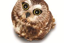 OWLS!!!!!!!