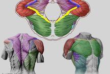Anatomyforsculptors
